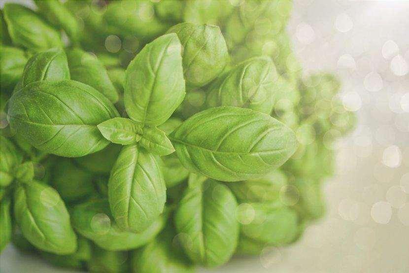 Il basilico è una pianta aromatica.