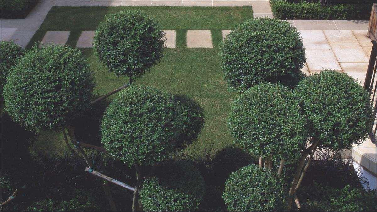 Il ligustro è un arbusto resistente al vento.