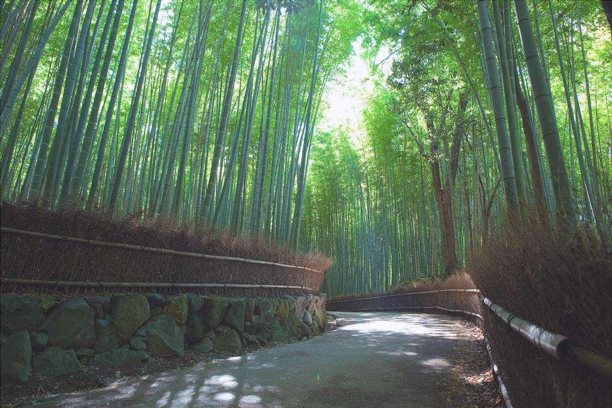 La foresta di bambù di Kyoto è mozzafiato