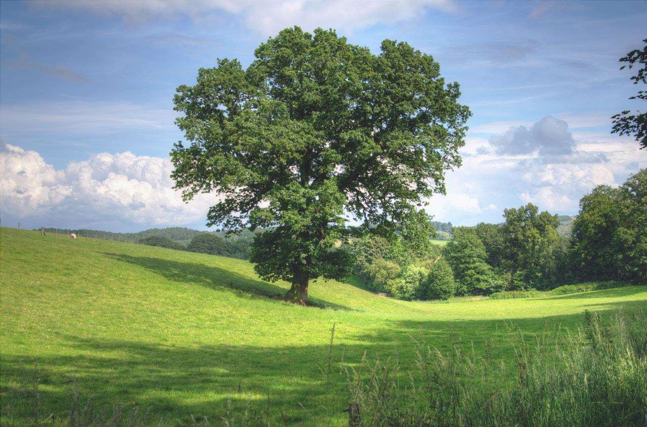 Un albero è una pianta vascolare legnosa.