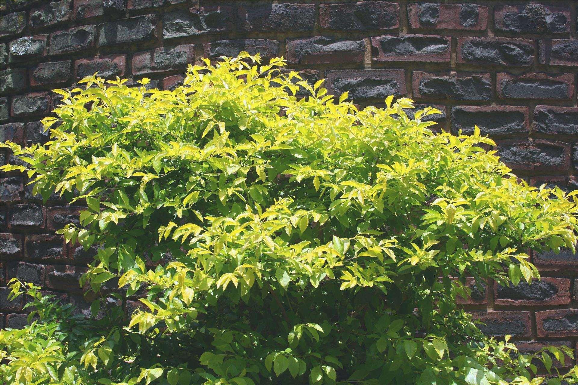 Un arbusto è una pianta vascolare di piccola altezza.