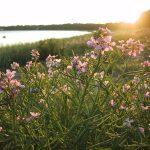 arbusto de plantas con flores que crecen junto al mar