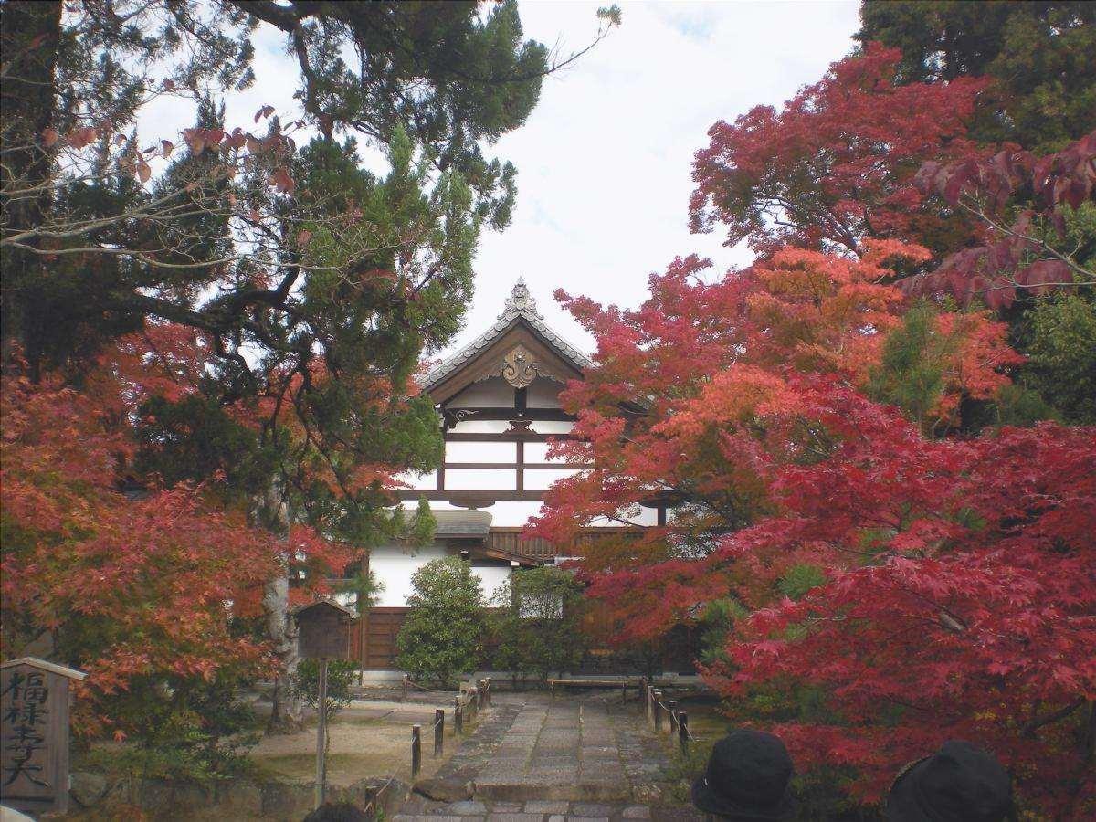 Gli aceri giapponesi sono alberi di montagna