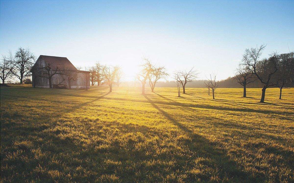 L'auxina ha diverse applicazioni in agricoltura