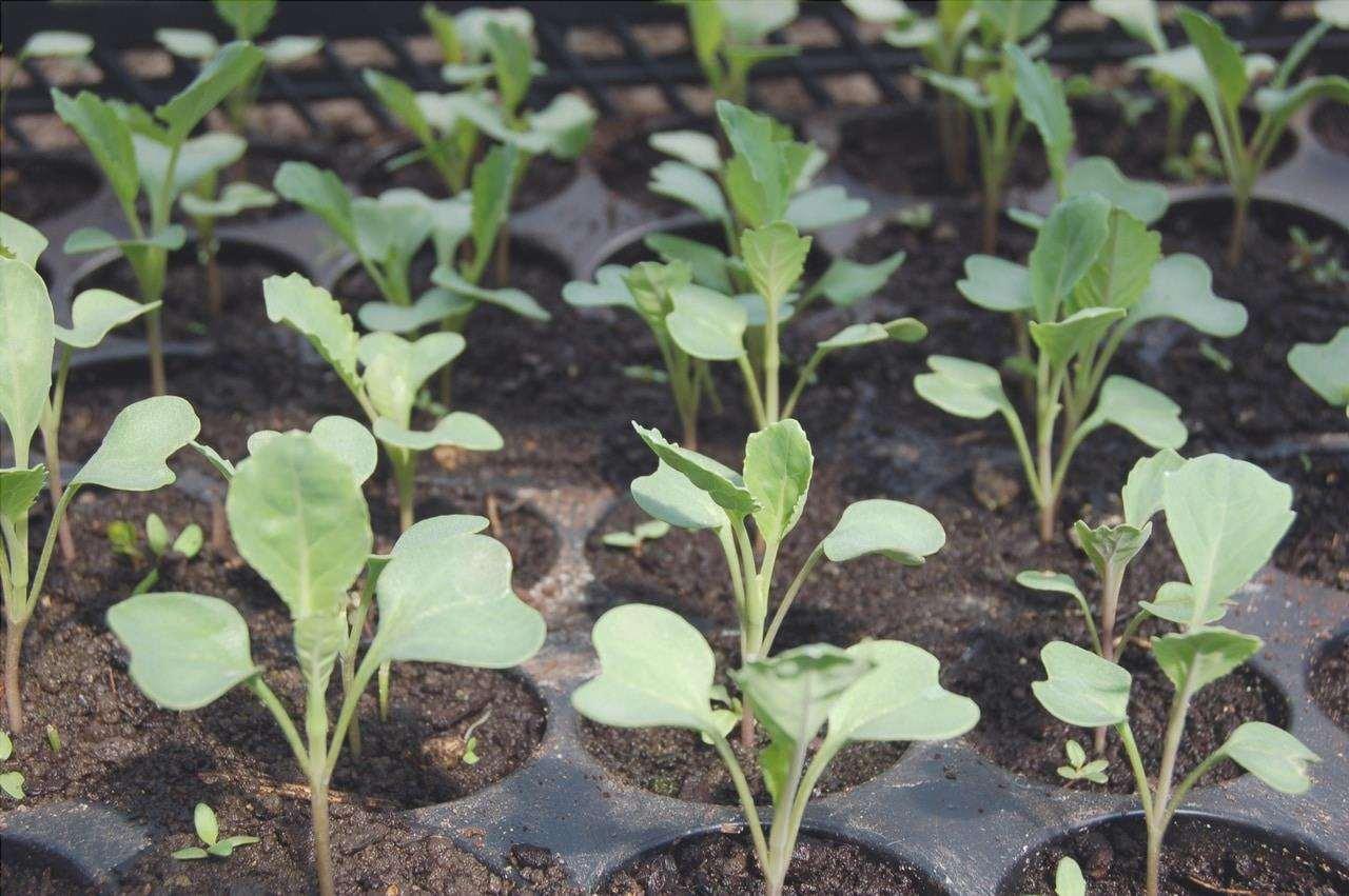 Le vaschette per le piantine sono utili per la semina