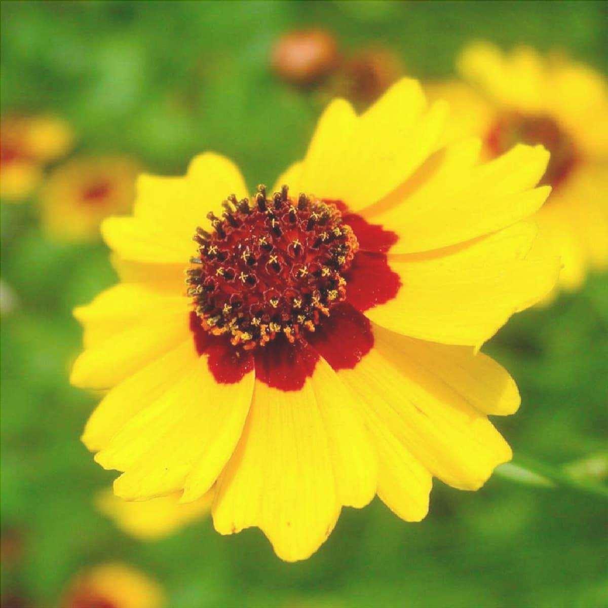 bellezza dei fiori della stella polare