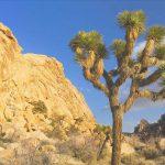 bioma de desierto