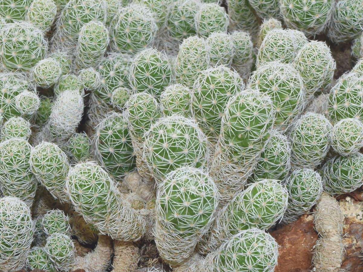 I cactus sono piante vascolari, generalmente con spine.