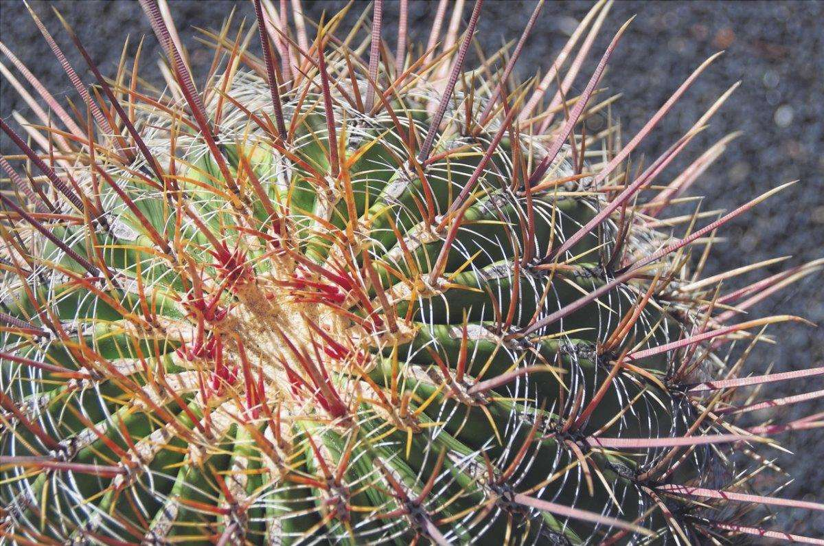 Scopri come prendersi cura di un cactus