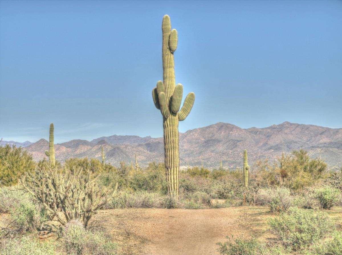 Il clima che i cactus hanno nel loro habitat è caldo e secco.