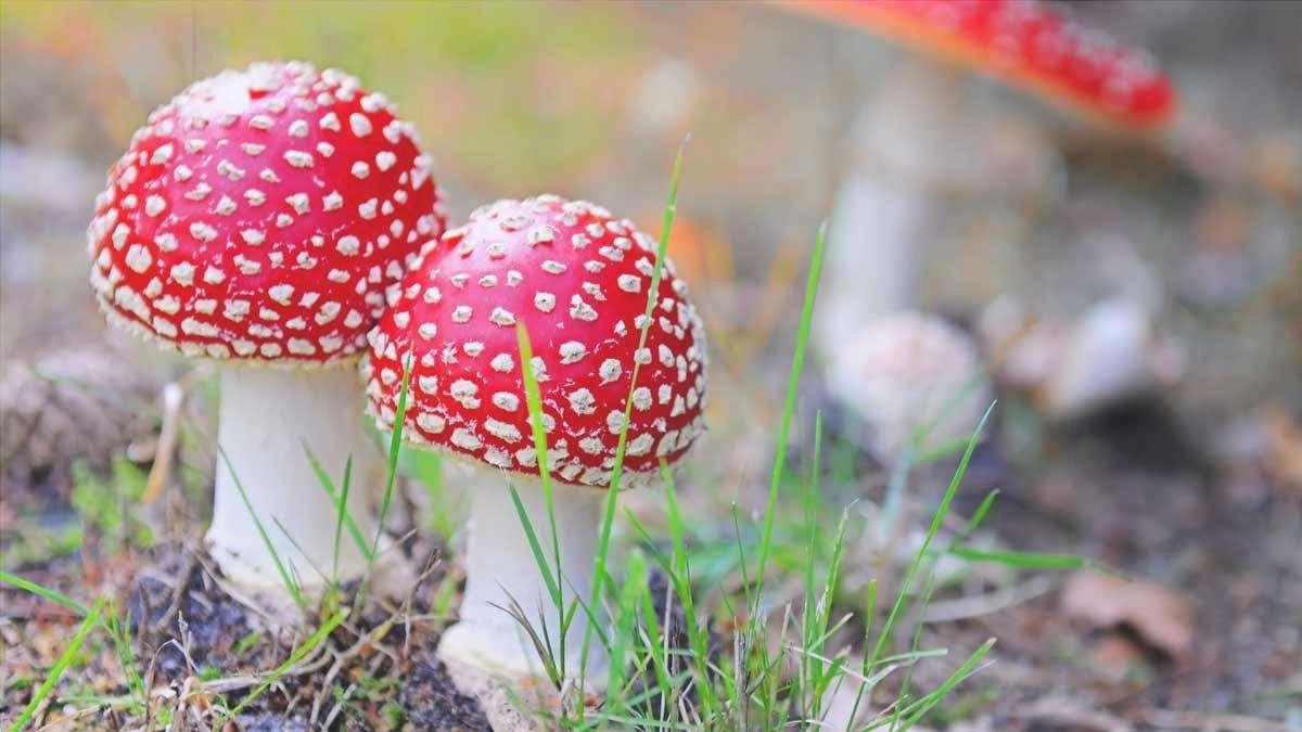 caratteristiche principali dei funghi