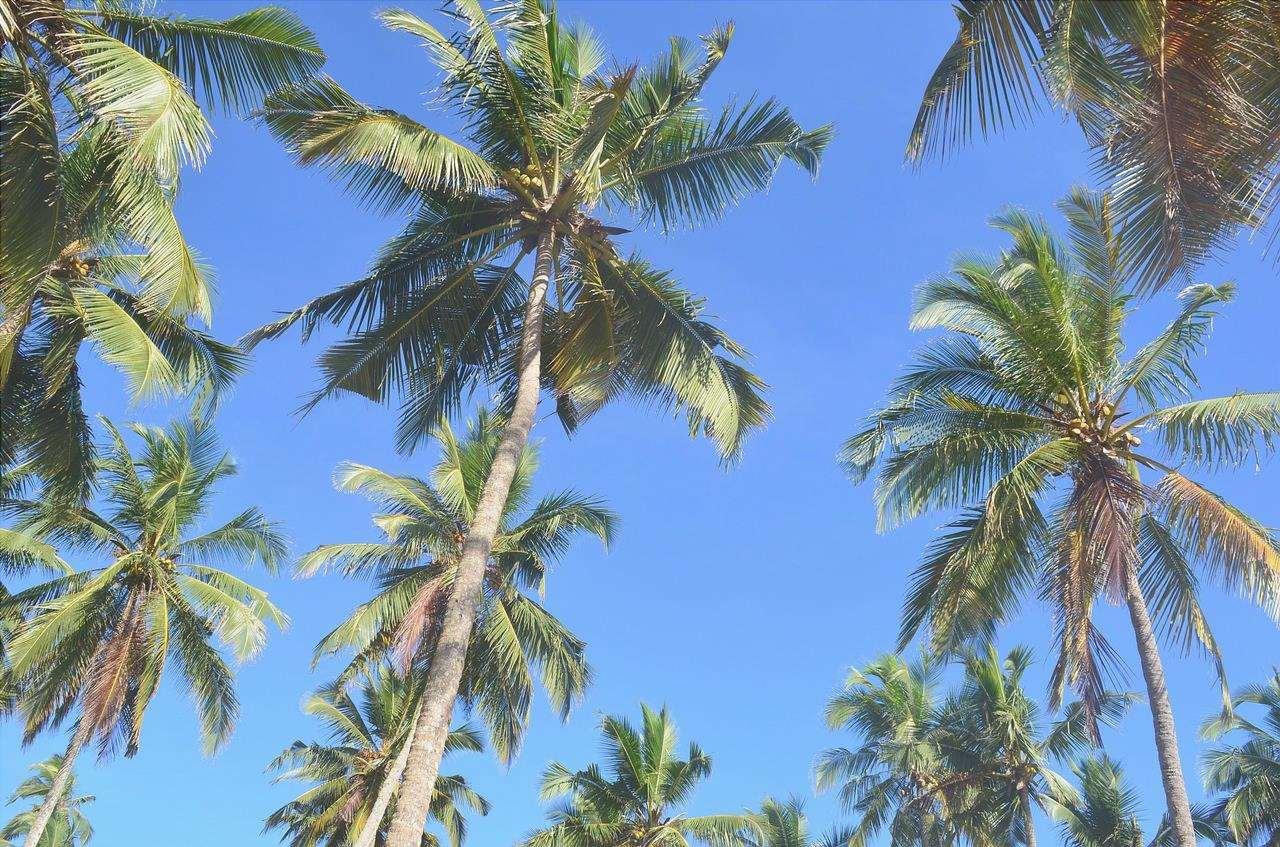 Le palme resistono al vento