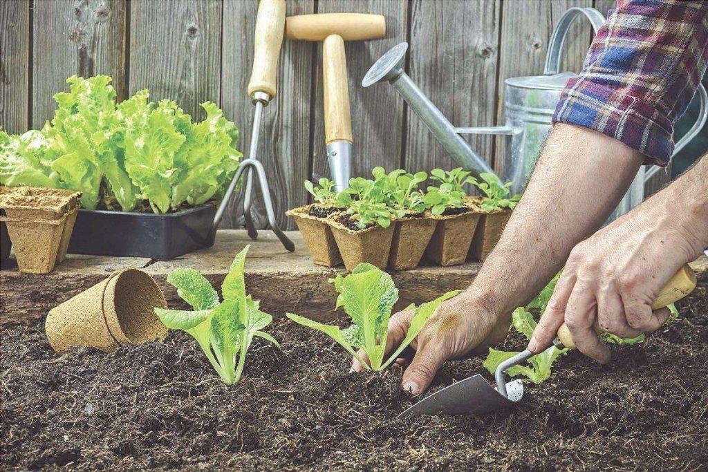como hacer un huerto en casa
