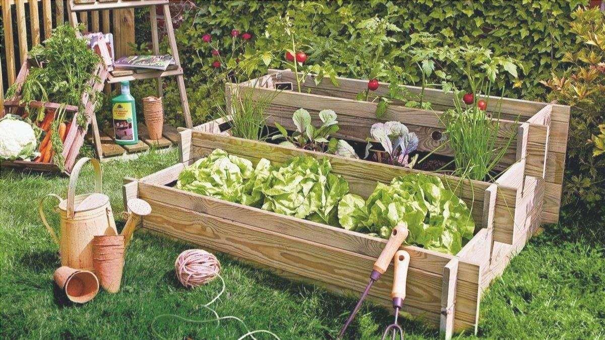 consigli per imparare a fare un orto in casa