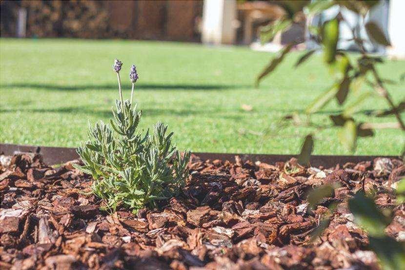 Corteccia di pino in giardino