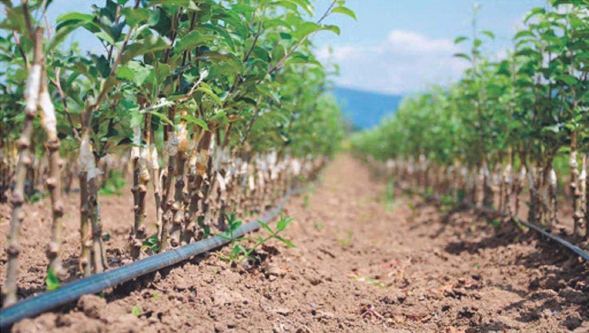 domanda di fertilizzante