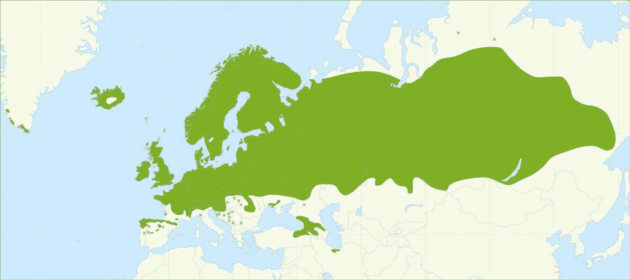 Betula pubescens è un albero con una distribuzione cosmopolita.