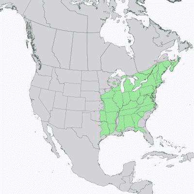 Gamma di distribuzione del frassino americano