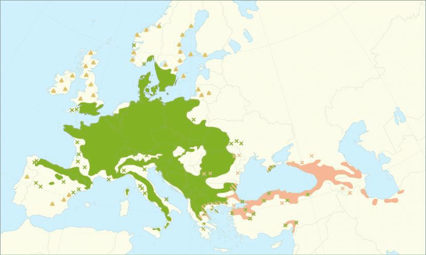 Il faggio è originario dell'Europa