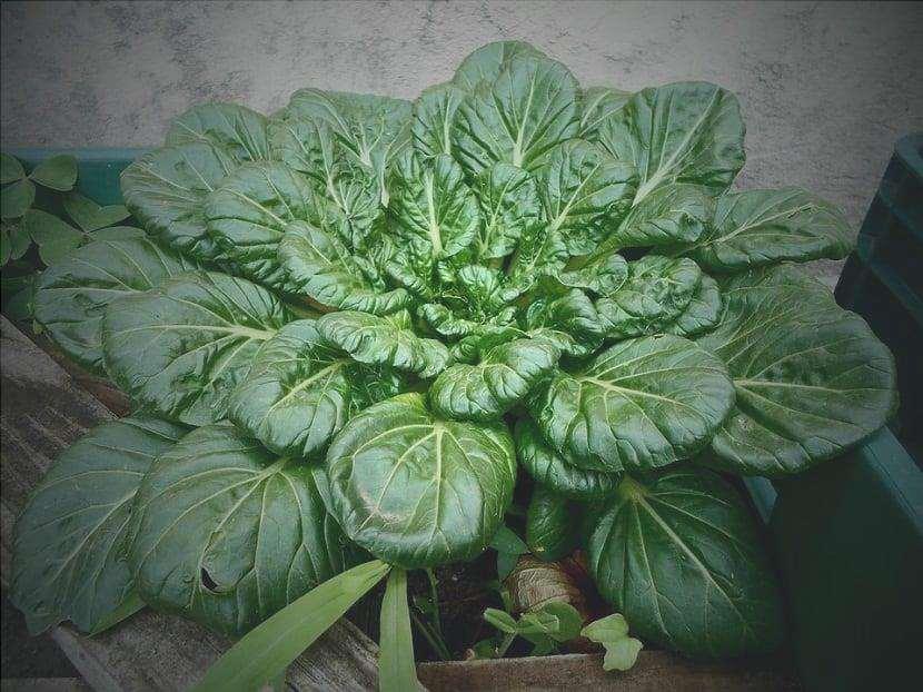 Usi degli spinaci
