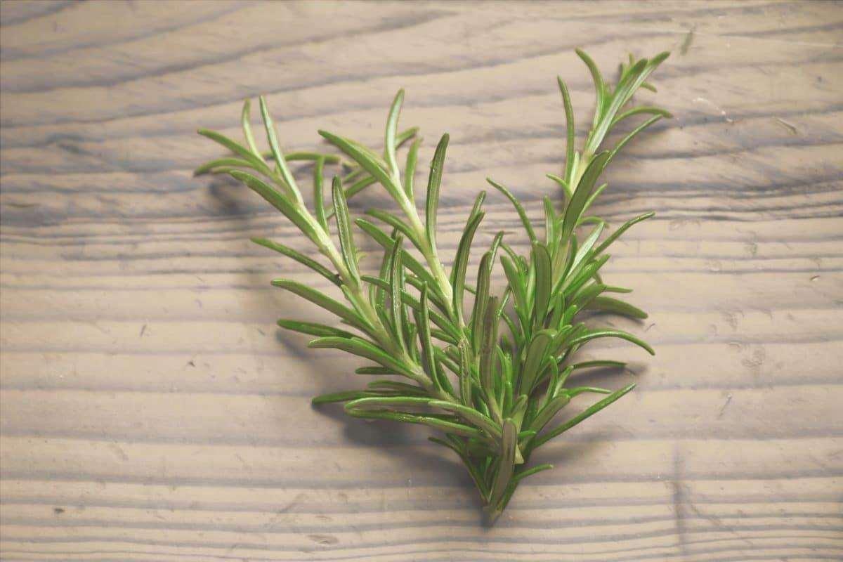 Ci sono molte piante che si riproducono per talea, come il rosmarino.