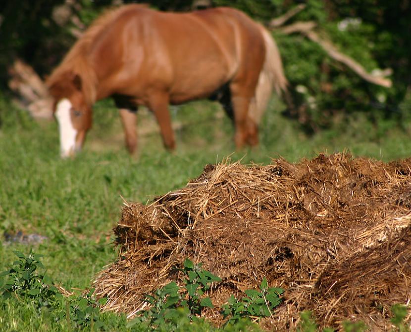 estiercol caballo 1