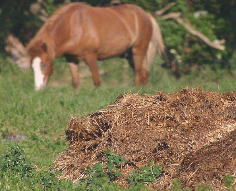 Letame di cavallo
