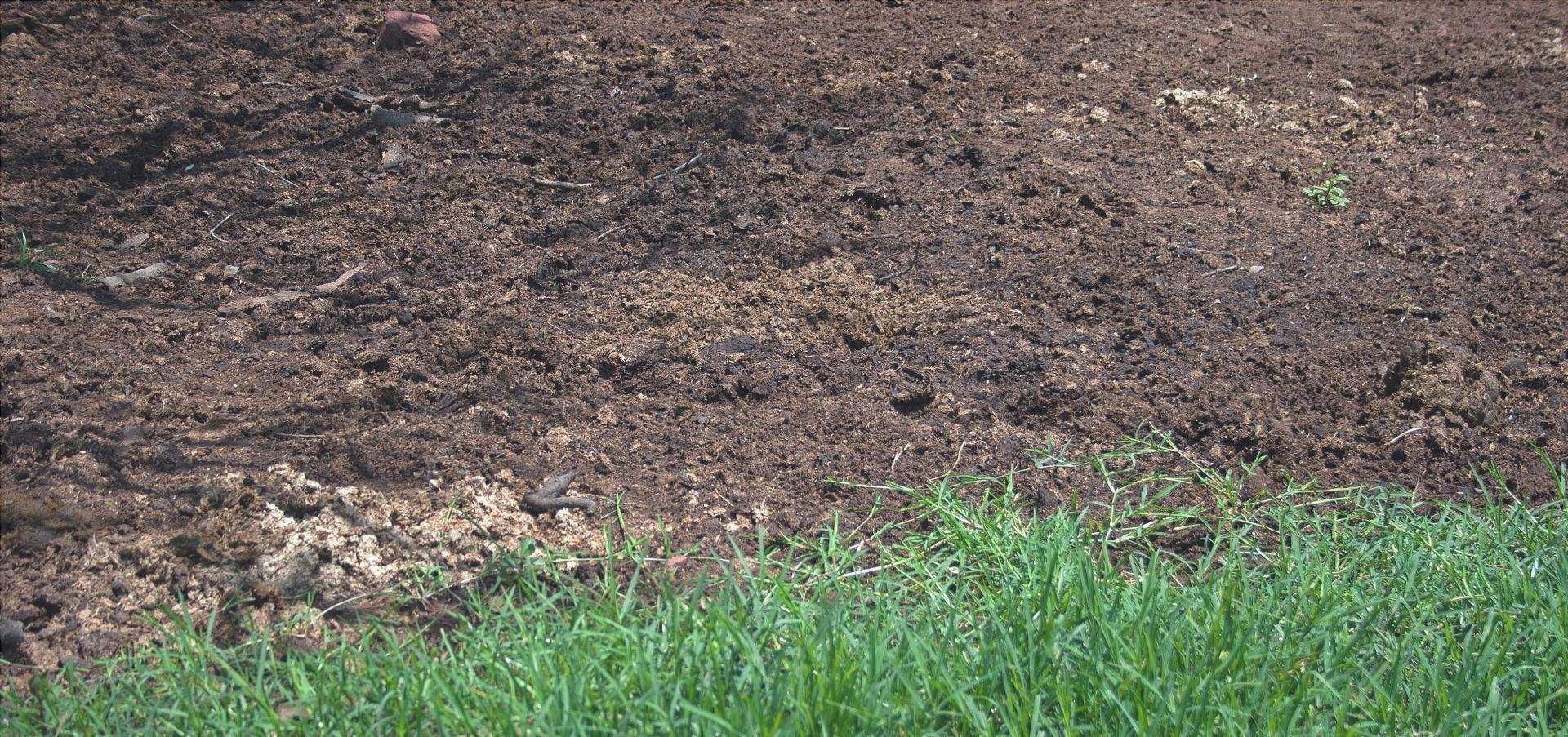 Il letame di cavallo è un fertilizzante naturale