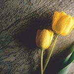 flor amarilla que transmite energia y sinceridad