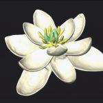 flor prehistorica