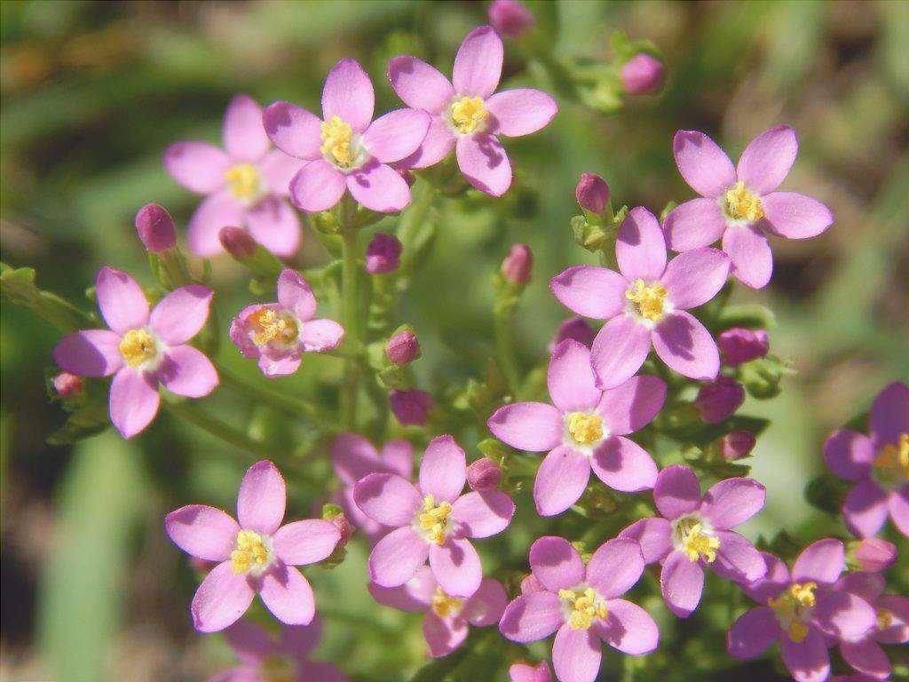 I fiori sono molto decorativi