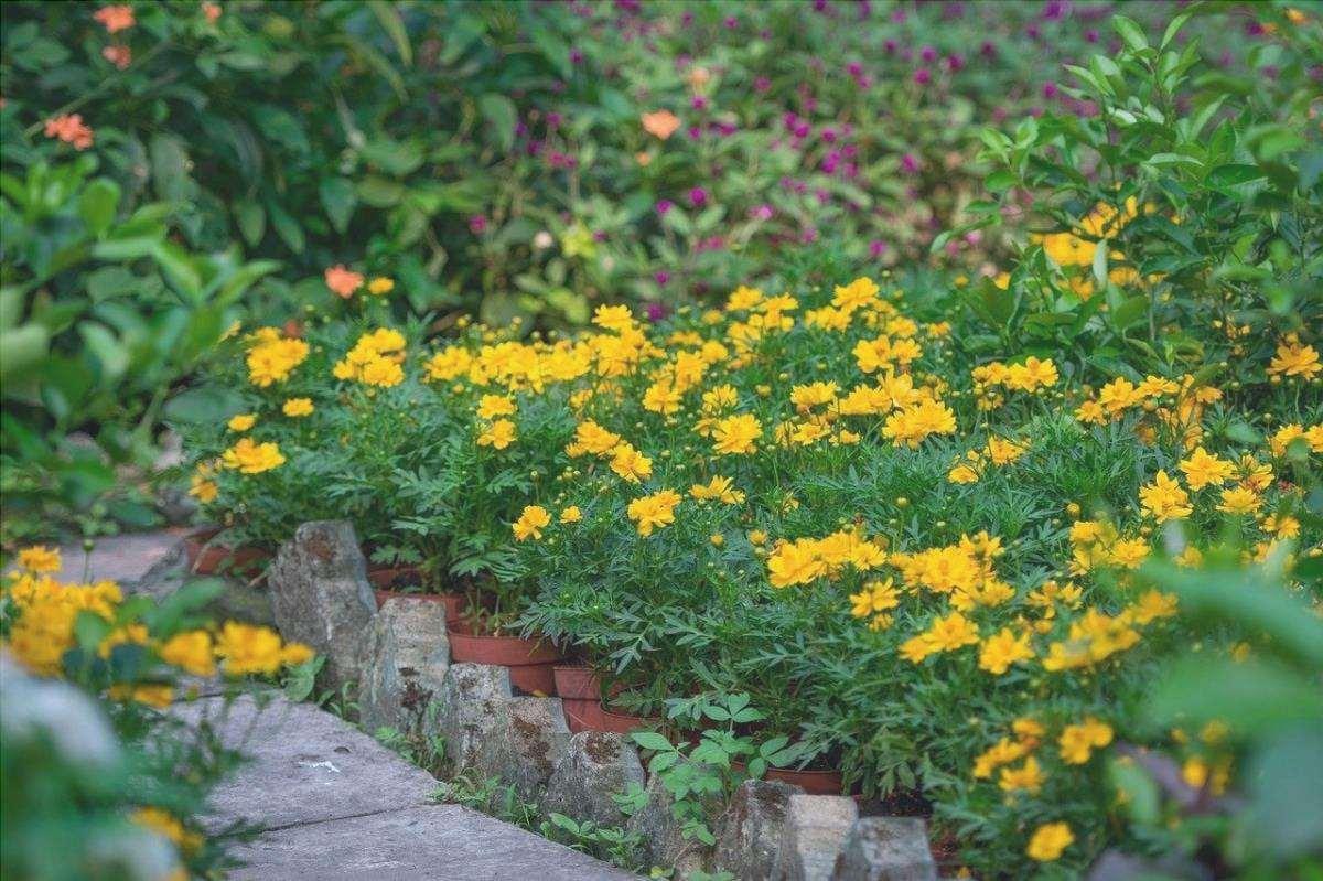 Pianta dei fiori in vaso nel tuo giardino