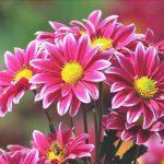 flores decorativas y vistosas