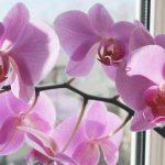 flores preciosas de las orquideas 1