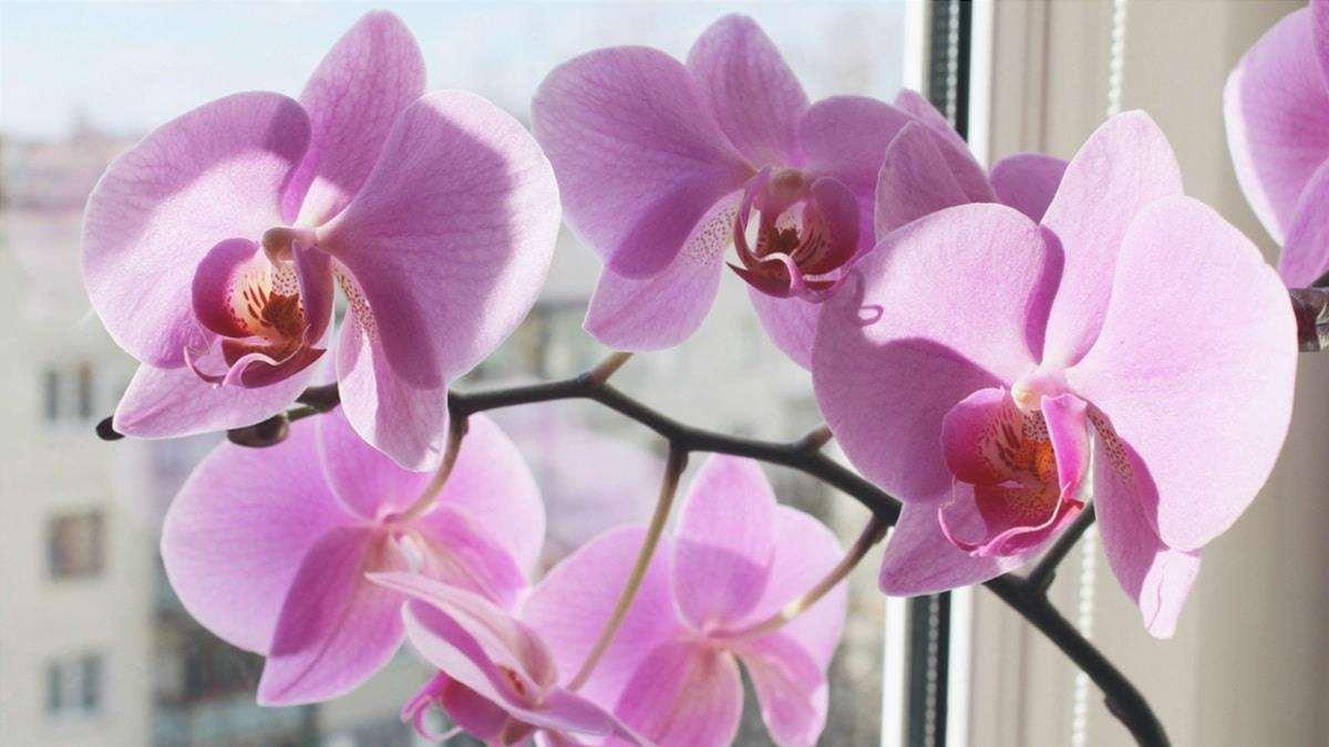 Orchidee trapiantate in primavera
