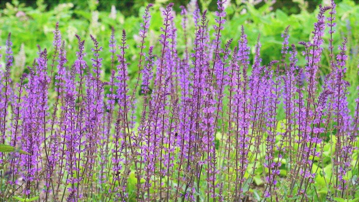 Ci sono molti parassiti e malattie che possono bloccare la crescita delle piante.