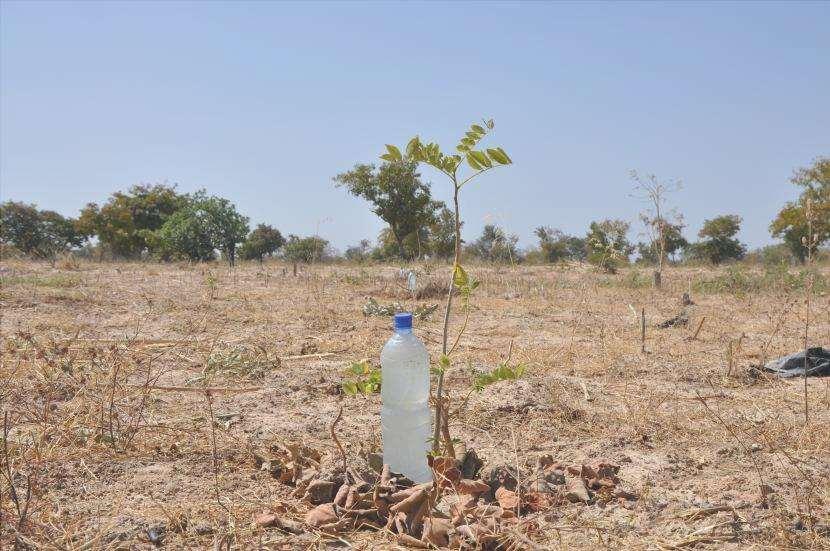 irrigazione a goccia domestica