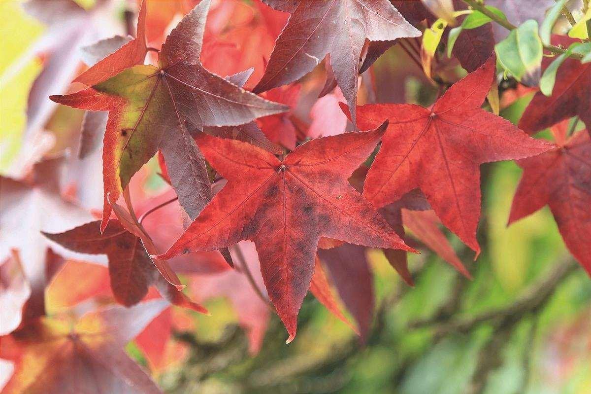 Ci sono molti tipi di foglie d'albero