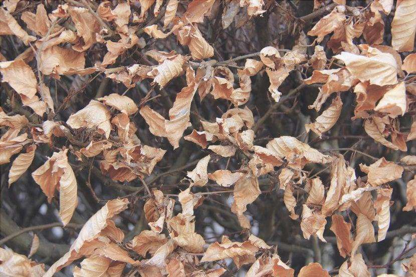 Le foglie che cadono a terra si decompongono e rilasciano sostanze nutritive.