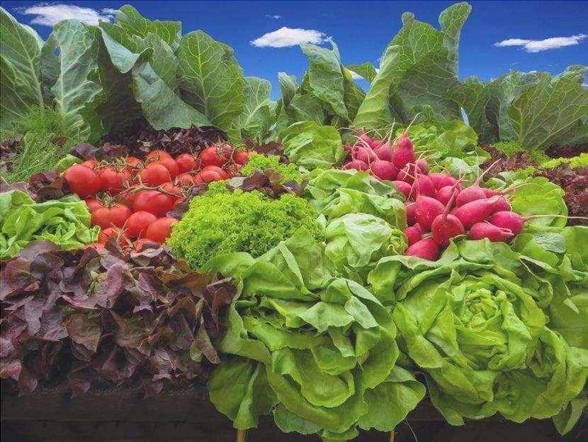 Le verdure sono piante commestibili