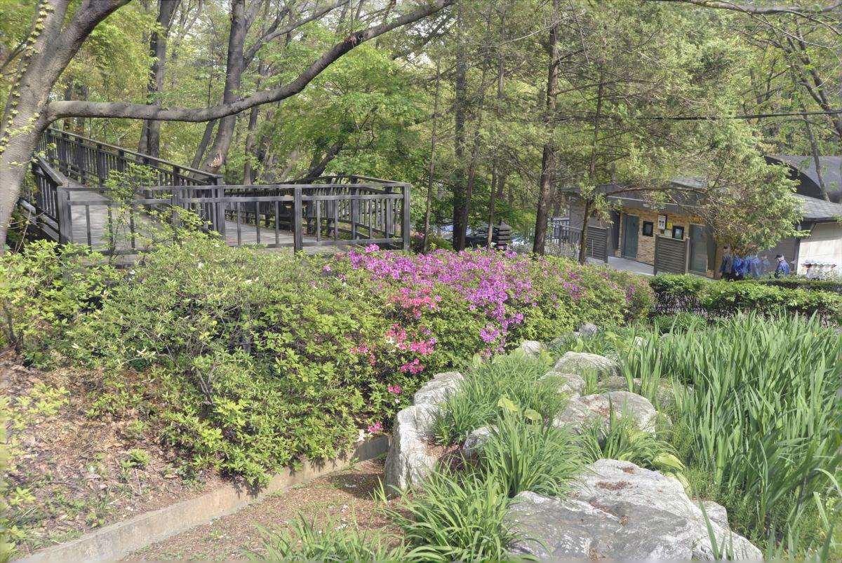 Un giardino è pieno di piante vascolari