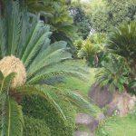 jardin de cicas