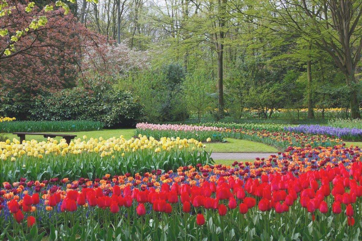 Nel mondo ci sono molti bei giardini