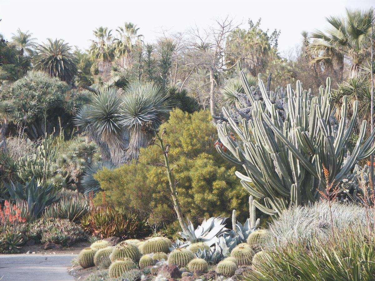 Vista di un giardino secco