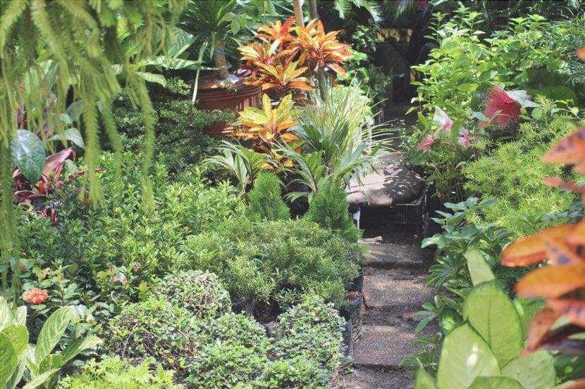 Giardino tropicale