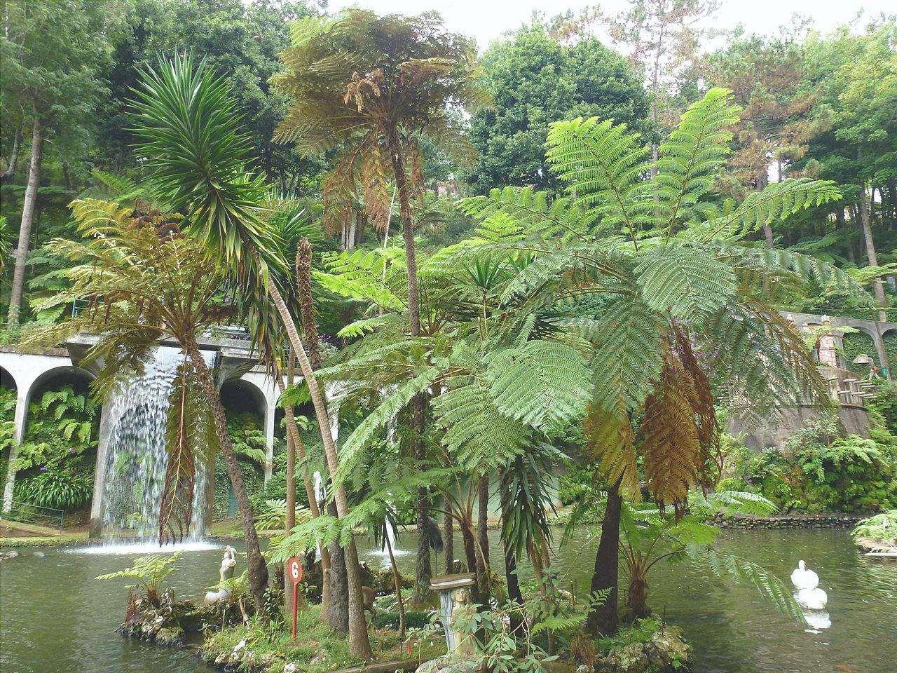 Il giardino tropicale è caratterizzato da piante esotiche.
