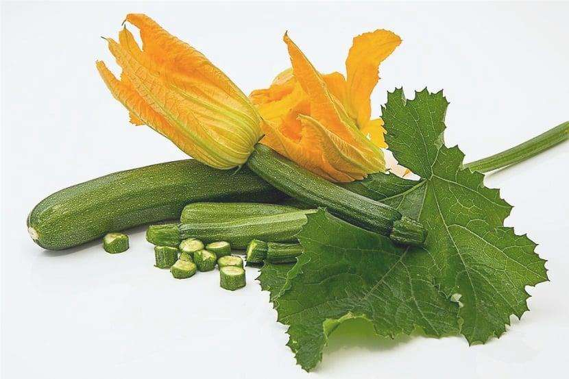 tipi di zucchine