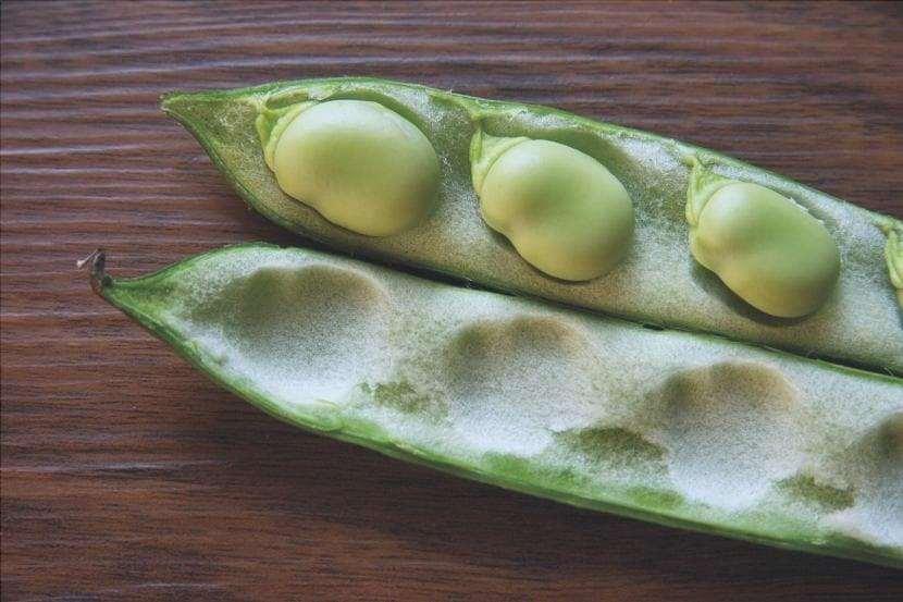 Semi di fave sul tavolo