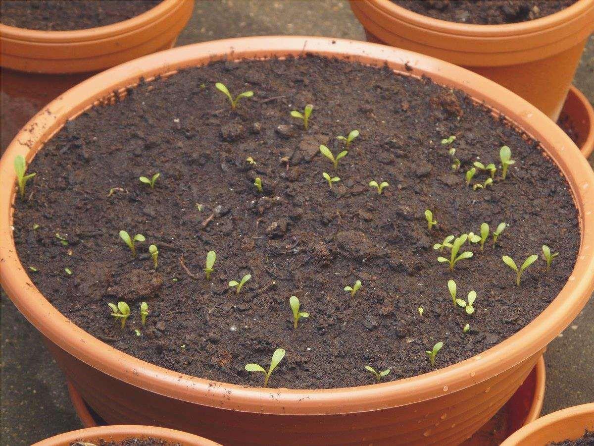 I vasi sono buoni letti di semina