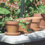 macetas de barro con plantas 1